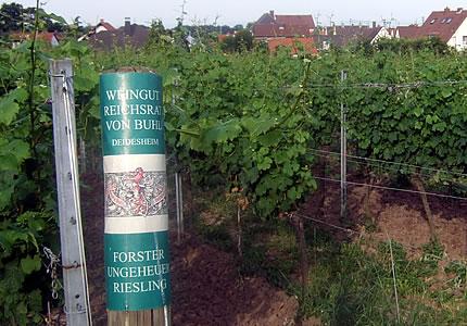 Pfalz Riesling Großes Gewächs 2009