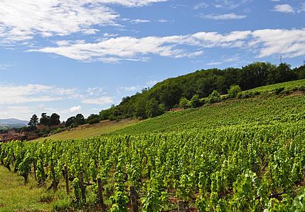 Das Beaujolais entdecken