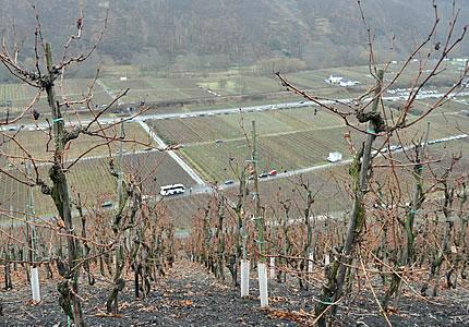 Ahr: Walporzheimer Klosterberg oder Ahrweiler Klosterberg