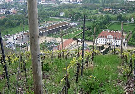 Schloss Wackerbarth Radebeuler Johannisberg